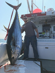 Fresh Quality and Healthy Grade A Giant Bluefin Tuna for Sale