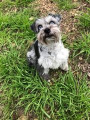 Dog Boarding Magnolia TX   The Barkly Pet Retreat & Spa